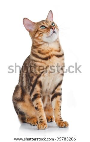 lovely cat isolated on white - stock photo