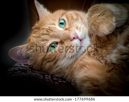 Lovely red cat looking somewhere. Selective focus.  - stock photo