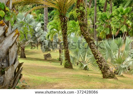 Martinique, the park of picturesque Habitation Clement in Le Francois in West Indies