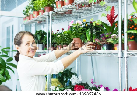 mature woman chooses  Primula or  hyacinth at flower store - stock photo