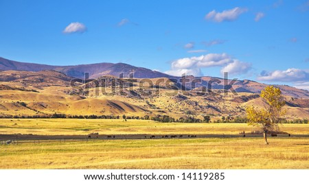 Meadow in a valley of the river Missouri and grazed black cows - stock photo