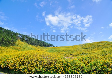 Mexican sunflower on mountain  and blue sky background