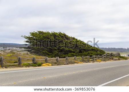 17 mile drive landscape at pacific coast, Monterey, California - stock photo