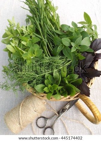 mix of fresh herbs basil oregano tarragon dill
