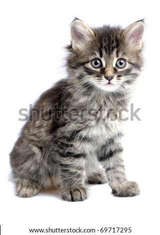 1,5 month old kitten on white background - stock photo