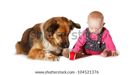 9 months old Baby and dog playing on white background - stock photo