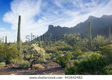 Morning in the  Organ Pipe Cactus National Monument, Arizona, US