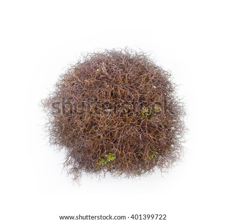 moss from the wild mountain places in isolation - stock photo