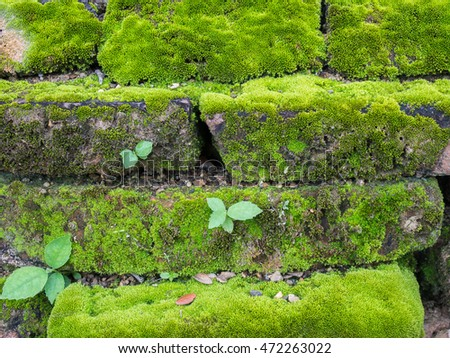 moss on literate   wall