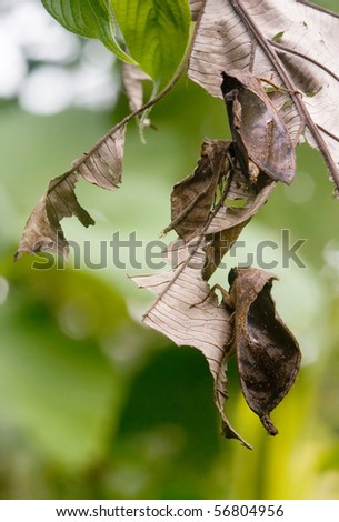 moths - stock photo