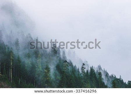 mountain forests covering by fog. - stock photo