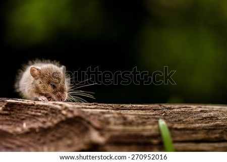 Mouse in it's Natural Habitat - stock photo