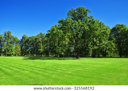 Mown lawn and trees in the leafy garden. - stock photo