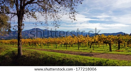 Napa Wine Country, California                               - stock photo