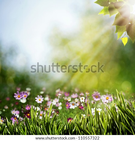natural backgrounds with beauty flowers - stock photo