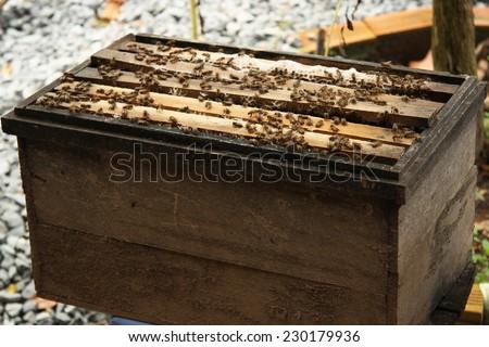Natural wood bee box - stock photo