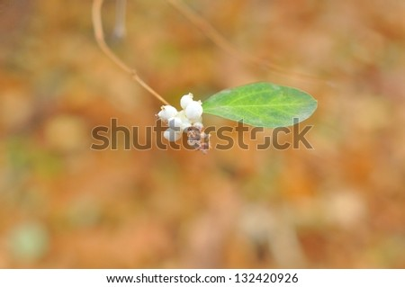 Nature  - branch with white berries and green leaf on the natural colorful background. - stock photo