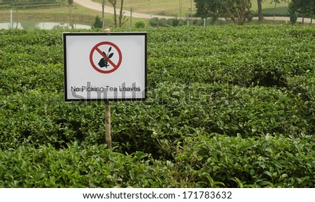 """no picking tea leaves"" sign"
