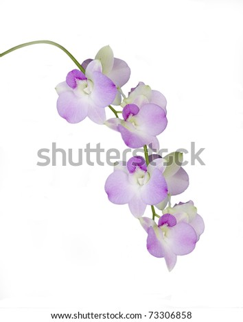 Orchid Stems Isolated on White - stock photo