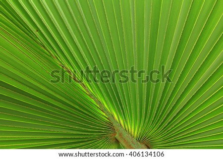 palm leaves and pattern