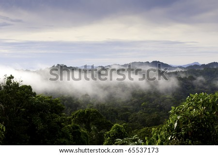Panama jungle vista. - stock photo