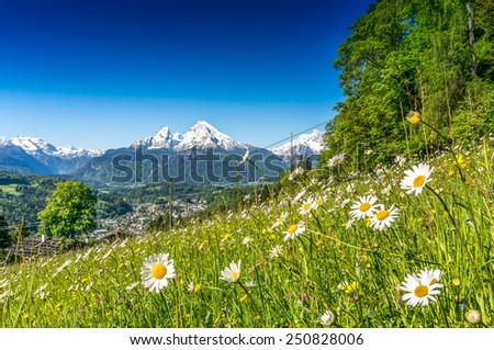 Panoramic view of beautiful landscape in the Bavarian Alps with beautiful flowers and famous Watzmann mountain in the background in springtime, Nationalpark Berchtesgadener Land, Bavaria, Germany - stock photo