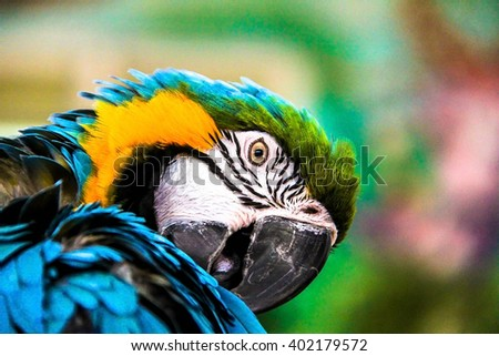 parrot macaws ( Ara ararauna) on grunge background