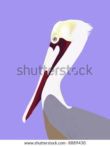 """Pelican Portrait"" is hand drawn original artwork. - stock photo"