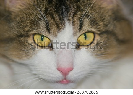 pets animals cat domestic animal no on white out
