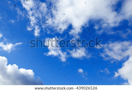 photographed close-up blue sky, in which a flock of birds flying, visible silhouettes, daytime, clouds - stock photo