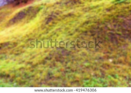 photographed close up of green vegetation, out of focus, - stock photo