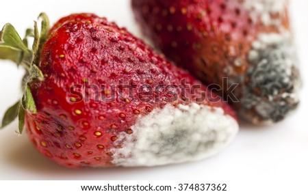 photographed close-up of red ripe strawberries, which have a white mold. small depth of field. not isolated - stock photo
