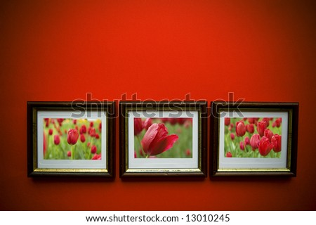 picture of flowers with  frames on red  wall - stock photo