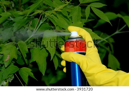 Picture of hand holding spray and spraying leafs of tree. - stock photo