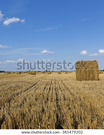 piled in the agricultural field haystacks straw. cereals. summer - stock photo