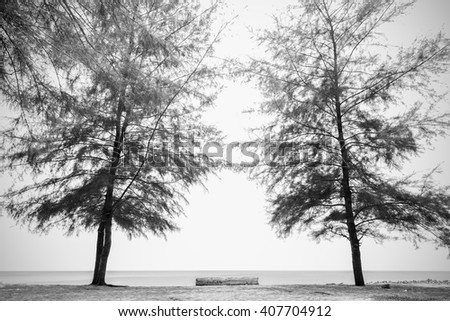 Pine tree forest old timber wood stockfoto 461611540 for Pine tree timber