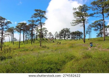 pine trees and meadow at the peak of mountain in Thailand - stock photo