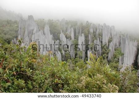 Pinnacles in Gunung Mulu National Park. Borneo. Malasia. - stock photo