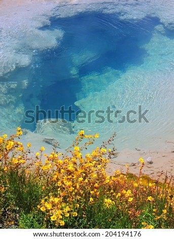 Pinto spring and seep monkey flowers in the cascade  geyser  group in yellowstone  national park, wyoming - stock photo