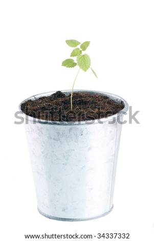 plant in flowerpot - stock photo