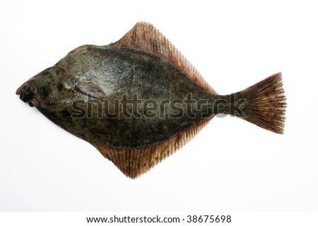 (Platichtys flesus) Baltic flounder, European flounder, Fluke, Flounder. Fresh caught lying on a light background