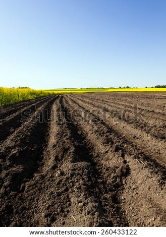 plowed agricultural field. Near growing canola. Blue sky. - stock photo