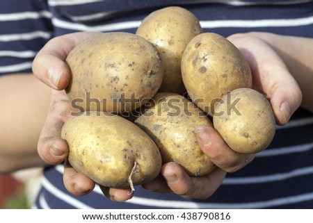 potatoes lying in the hands of a woman, close-up, small depth of field