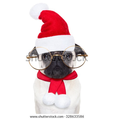 pug dog as santa claus with big glasses, for christmas holidays, looking dumb, isolated on white background