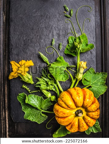 pumpkin Composition with stems, leaves, flowers and small fruits on  dark background , top view - stock photo