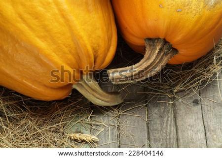 pumpkins in a barn still life - stock photo