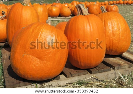 3 pumpkins in front - stock photo