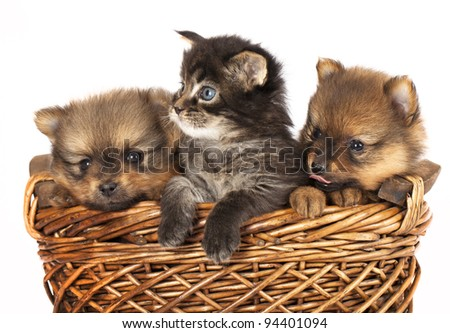 puppies and  kittens - stock photo