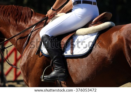 Purebred racehorse with beautiful trappings under saddle during training - stock photo