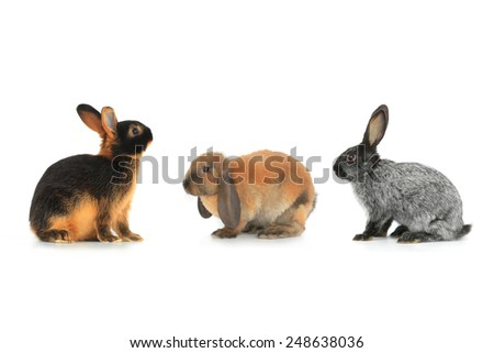 rabbits on a white background - stock photo